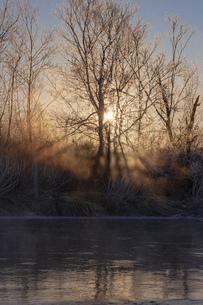 北海道 阿寒郡阿寒町の樹氷と気嵐の写真素材 [FYI04777524]