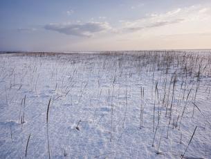 雪原の写真素材 [FYI04777636]