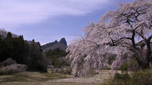 菅原の枝垂桜の写真素材 [FYI04777644]