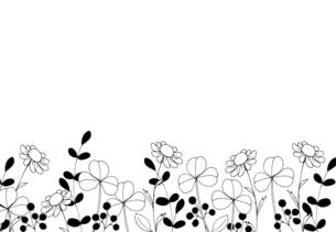 草花の線画 手描きイラストのイラスト素材 [FYI04777689]