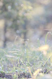 キャンプ場の朝露が光にあたって美しい様子、明るい朝のイメージの写真素材 [FYI04777918]