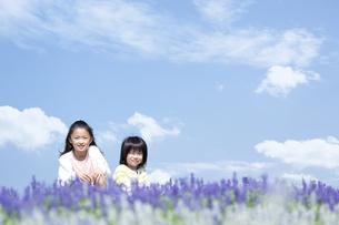 花畑に座る女の子と男の子の写真素材 [FYI04778082]