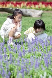 花畑に座る女の子と男の子の写真素材 [FYI04778086]