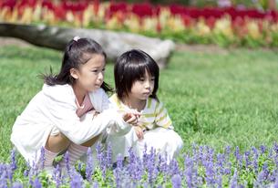花畑に座る女の子と男の子の写真素材 [FYI04778087]