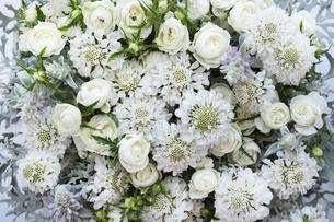 一面の白いスカビオサとバラのアレンジメントの写真素材 [FYI04778621]