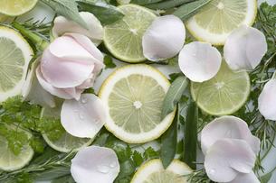 輪切りのレモンとバラとハーブの写真素材 [FYI04778635]