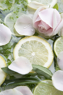 水に浮かぶ輪切りのレモンとバラとハーブの写真素材 [FYI04778641]