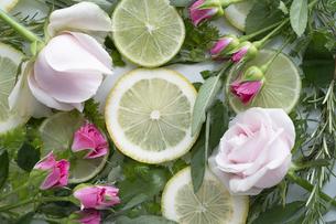輪切りのレモンとバラとハーブの写真素材 [FYI04778646]