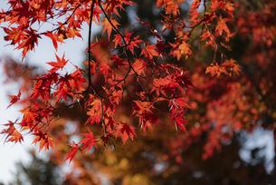 紅葉のある風景の写真素材 [FYI04778699]