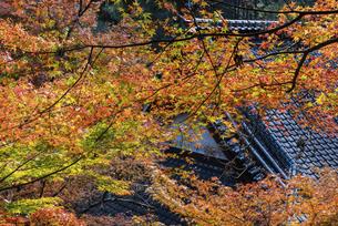 紅葉のある寺院風景の写真素材 [FYI04778708]