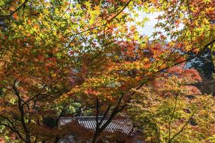 紅葉のある寺院風景の写真素材 [FYI04778709]