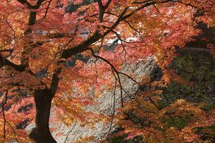 紅葉のある寺院風景の写真素材 [FYI04778716]