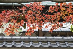 紅葉のある日本の風景の写真素材 [FYI04778717]