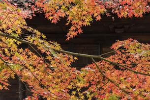 紅葉のある寺院風景の写真素材 [FYI04778718]
