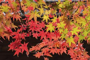 紅葉のある風景の写真素材 [FYI04778719]