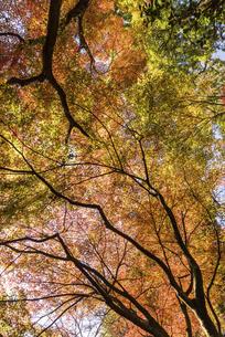紅葉のある風景の写真素材 [FYI04778721]
