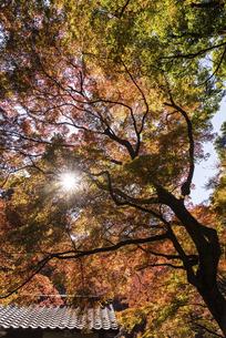 紅葉のある風景の写真素材 [FYI04778722]
