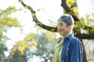 日本人シニア女性の写真素材 [FYI04779364]