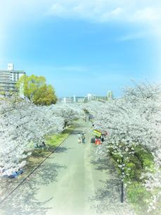桜並木と道の写真素材 [FYI04779377]