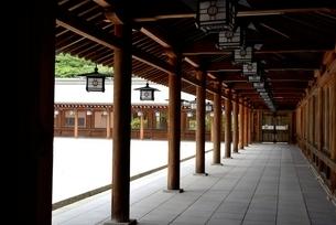 橿原神宮,境内の外拝殿から廊下の写真素材 [FYI04779588]