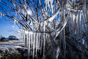 琵琶湖畔の氷の写真素材 [FYI04779633]