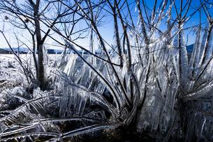 琵琶湖畔の氷 の写真素材 [FYI04779638]