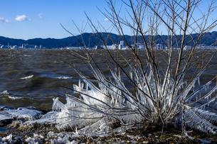 琵琶湖畔の氷 の写真素材 [FYI04779664]