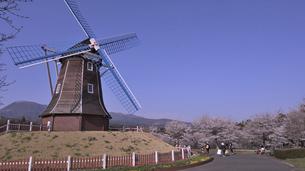 桜並木と風車の写真素材 [FYI04779751]