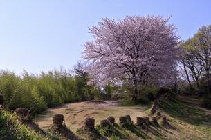 伝統文化の丘の写真素材 [FYI04779761]