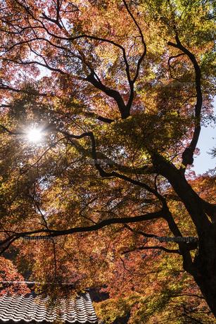 紅葉のある風景の写真素材 [FYI04779799]