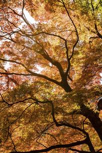 紅葉のある風景の写真素材 [FYI04779800]