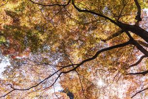 紅葉のある風景の写真素材 [FYI04779801]