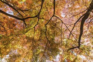 紅葉のある風景の写真素材 [FYI04779804]