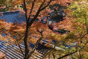 紅葉のある寺院風景の写真素材 [FYI04779805]