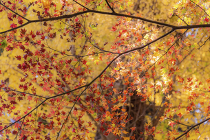 紅葉のある風景の写真素材 [FYI04779807]