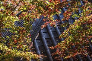 紅葉のある寺院風景の写真素材 [FYI04779808]