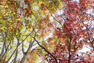 紅葉のある風景の写真素材 [FYI04779809]