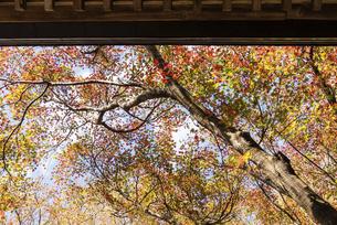 紅葉のある寺院風景の写真素材 [FYI04779811]