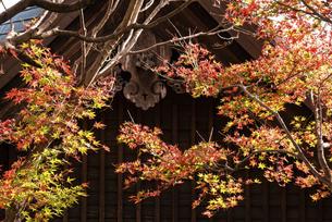 紅葉のある寺院風景の写真素材 [FYI04779813]