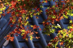 紅葉のある寺院風景の写真素材 [FYI04779814]