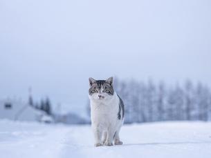 冬の猫の写真素材 [FYI04779835]