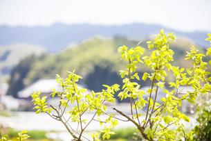 奈良県明日香村の風景の写真素材 [FYI04779953]