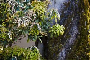 飛鳥寺に咲く花の写真素材 [FYI04779975]