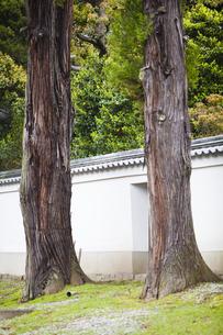 2本の樹木の写真素材 [FYI04779991]