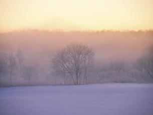 霧氷と気嵐の写真素材 [FYI04780396]