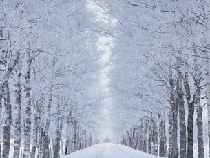 霧氷の並木道の写真素材 [FYI04780407]