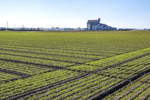 福岡県 麦畑の写真素材 [FYI04780495]