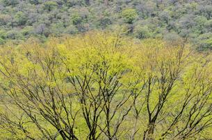 久住新緑の森の写真素材 [FYI04780601]