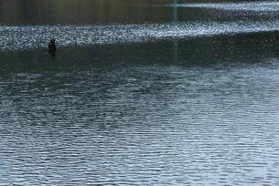 枯れ木のある湖の写真素材 [FYI04780604]