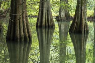 篠栗九大の森の写真素材 [FYI04780609]
